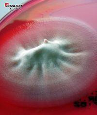 Fungisel Agar Ref.No. 1240 Graso 1169