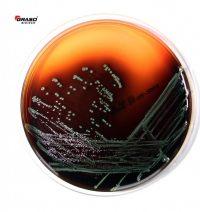 Graso 013 Palcam Agar 1502 L.monocytogenes