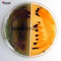Salmonella Shigella Agar_Bismuth Graso 053