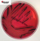 XLD Agar (Xylose Lysine Deoxycholate) (9016PD)