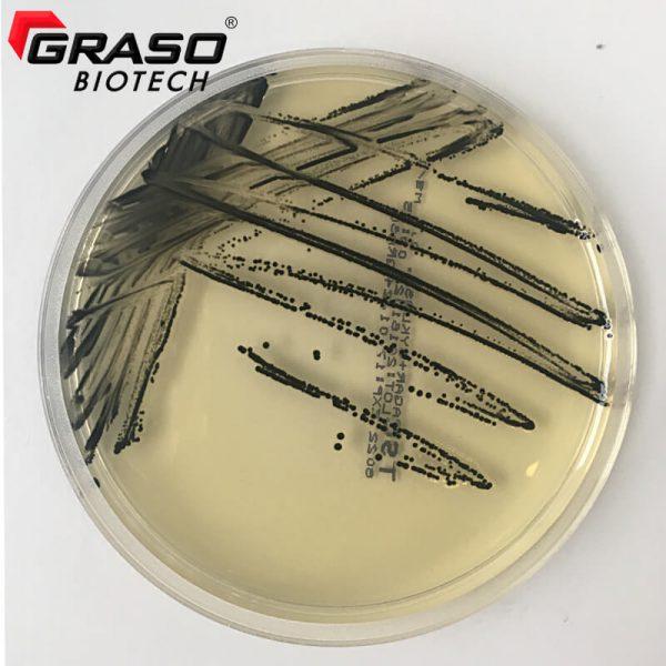 8022 TSC Clostridium perfringens